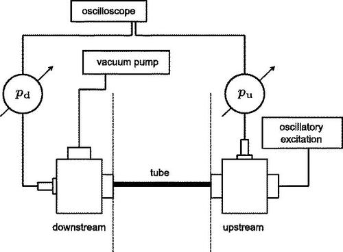 Oscillatory fluid flow in deformable tubes: Implications for