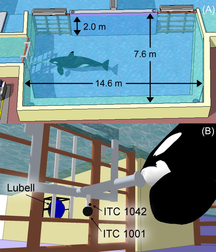 Killer whale (Orcinus orca) behavioral audiograms: The