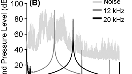 Reduction of sound-evoked midbrain responses observed by