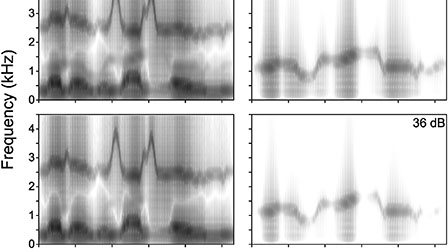 Dichotic integration of acoustic-phonetic information: Competition